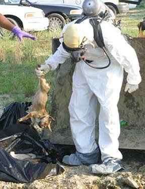 Retrieving dead animals previously in PeTA's care